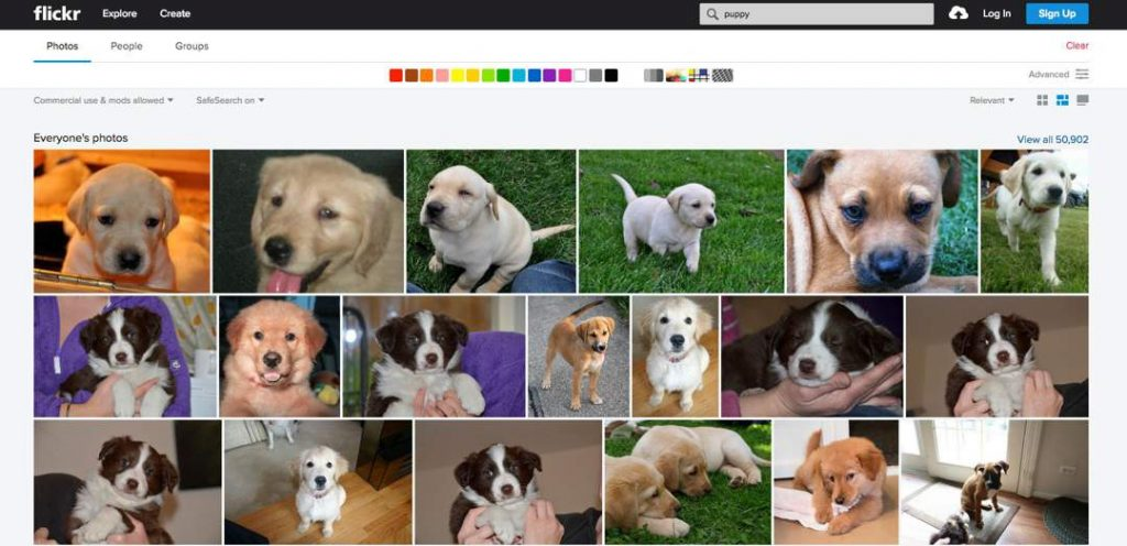 Screenshot of Flickr showing thumbnail images of puppies